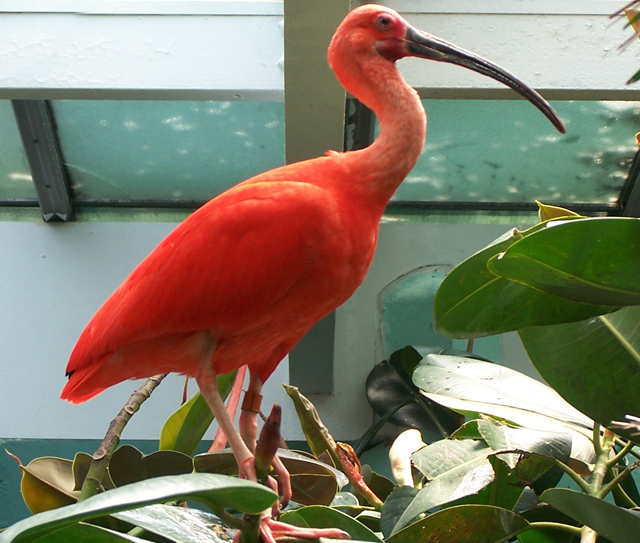Low-resolution photo enlarged